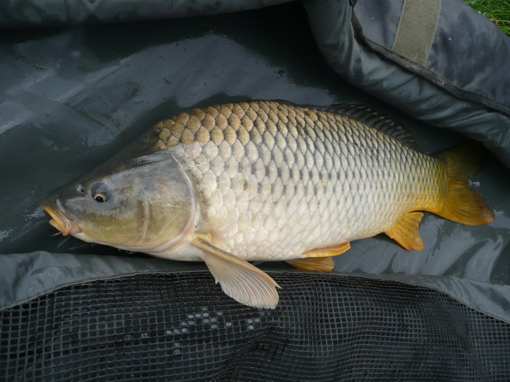 Frosty carp catching part 1 sbs baits for Carpa de rio